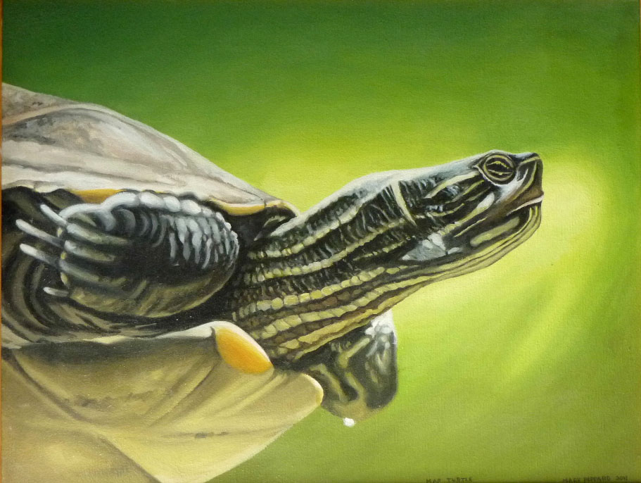 Map Turtle 1