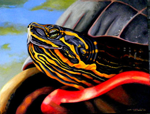 painted-painted-turtle.jpg